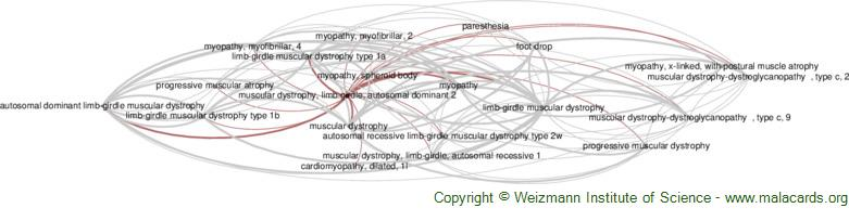 Diseases related to Muscular Dystrophy, Limb-Girdle, Autosomal Dominant 2