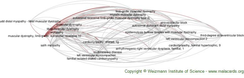 Diseases related to Muscular Dystrophy, Limb-Girdle, Autosomal Recessive 10