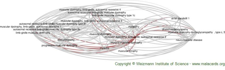 Diseases related to Muscular Dystrophy, Limb-Girdle, Autosomal Recessive 2