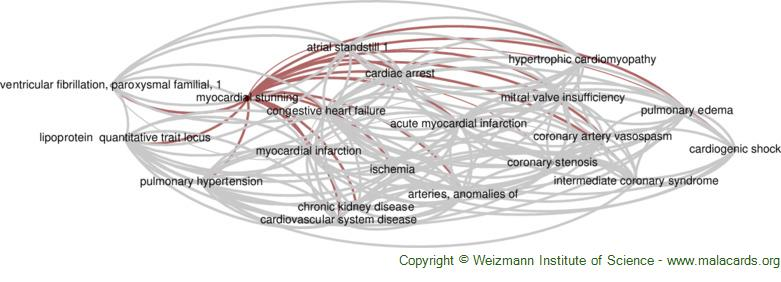 Diseases related to Myocardial Stunning