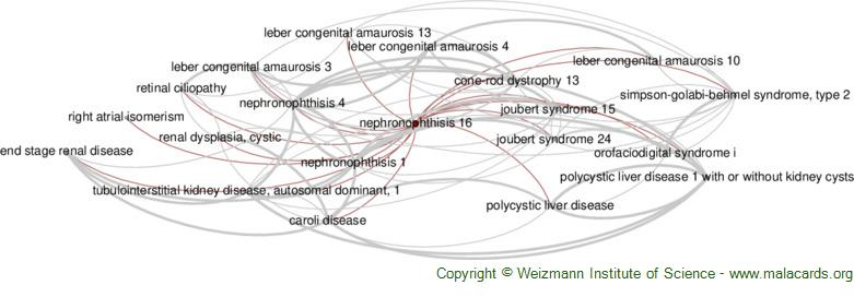 Diseases related to Nephronophthisis 16