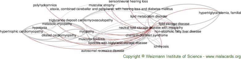 Diseases related to Neutral Lipid Storage Disease with Myopathy