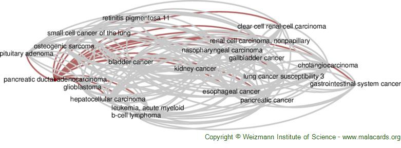 Diseases related to Pancreatic Ductal Adenocarcinoma
