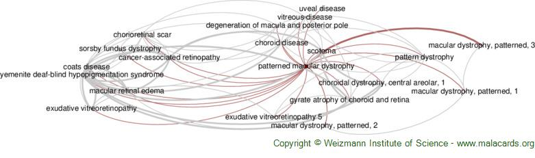 Diseases related to Patterned Macular Dystrophy