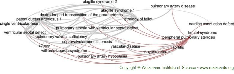 Diseases related to Peripheral Pulmonary Stenosis