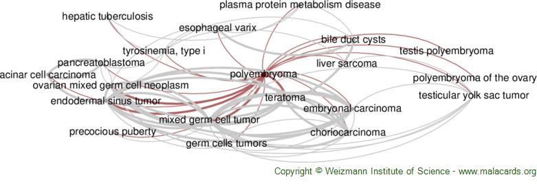 Diseases related to Polyembryoma