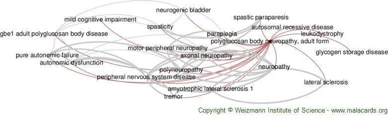 Diseases related to Polyglucosan Body Neuropathy, Adult Form