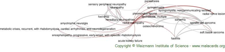 Diseases related to Radial Neuropathy