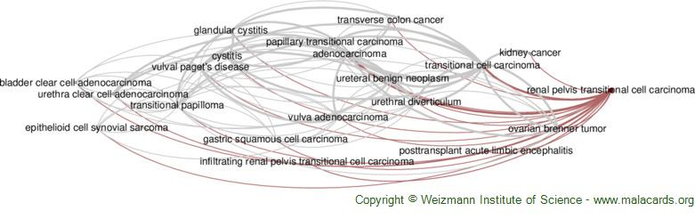 Diseases related to Renal Pelvis Transitional Cell Carcinoma