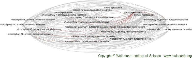 Diseases related to Seckel Syndrome 5