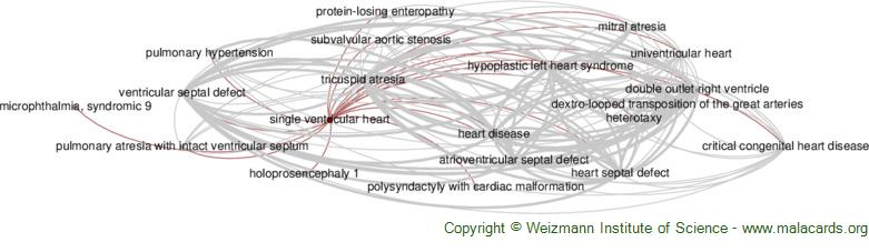 Diseases related to Single Ventricular Heart