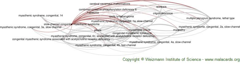 Diseases related to Slow-Channel Congenital Myasthenic Syndrome