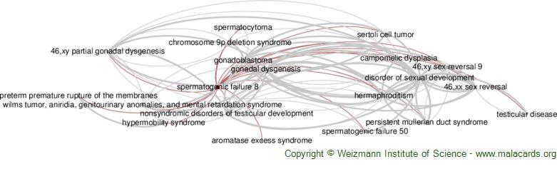 Diseases related to Spermatogenic Failure 8