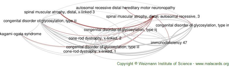Diseases related to Spinal Muscular Atrophy, Distal, Autosomal Recessive, 3