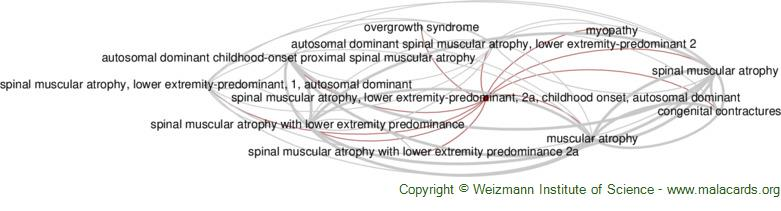 Diseases related to Spinal Muscular Atrophy, Lower Extremity-Predominant, 2a, Childhood Onset, Autosomal Dominant