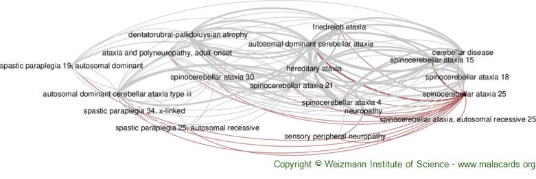 Diseases related to Spinocerebellar Ataxia 25
