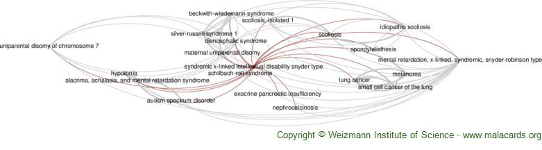 Diseases related to Syndromic X-Linked Intellectual Disability Snyder Type