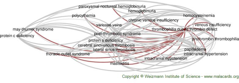 Diseases related to Thrombophilia Due to Thrombin Defect