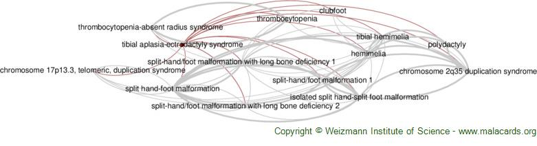 Diseases related to Tibial Aplasia-Ectrodactyly Syndrome