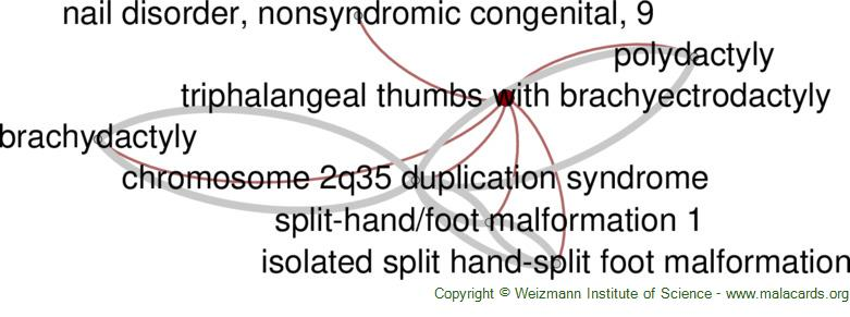 Diseases related to Triphalangeal Thumbs with Brachyectrodactyly