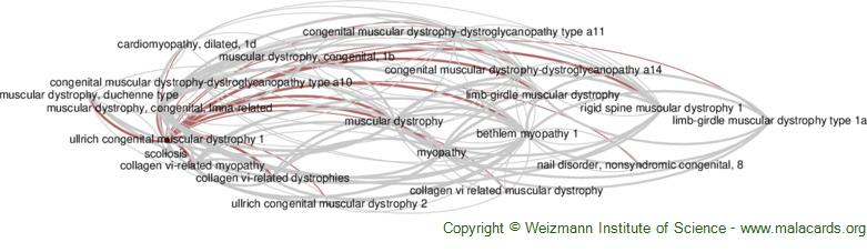 Diseases related to Ullrich Congenital Muscular Dystrophy 1