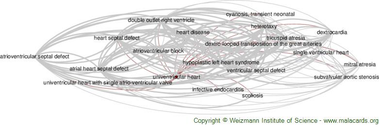 Diseases related to Univentricular Heart