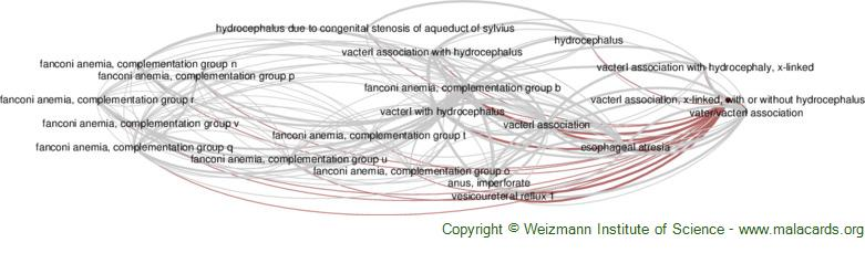 Diseases related to Vacterl Association, X-Linked, with or Without Hydrocephalus
