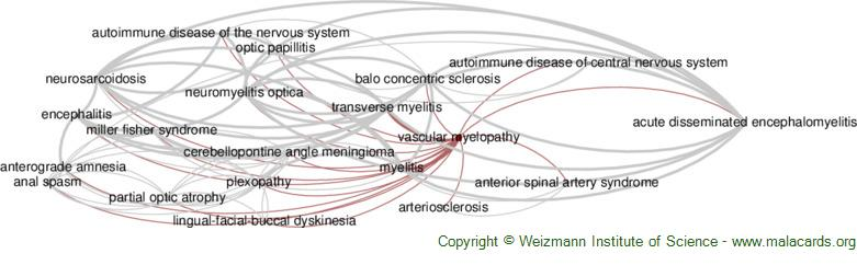 Diseases related to Vascular Myelopathy