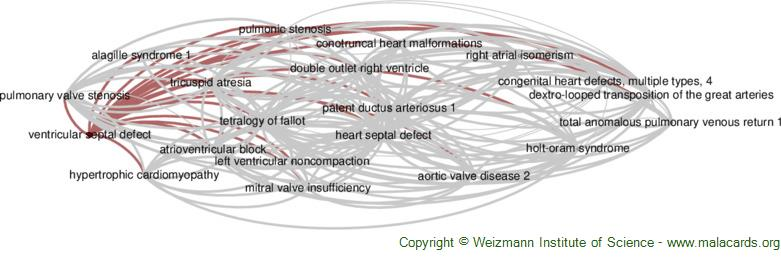 Diseases related to Ventricular Septal Defect