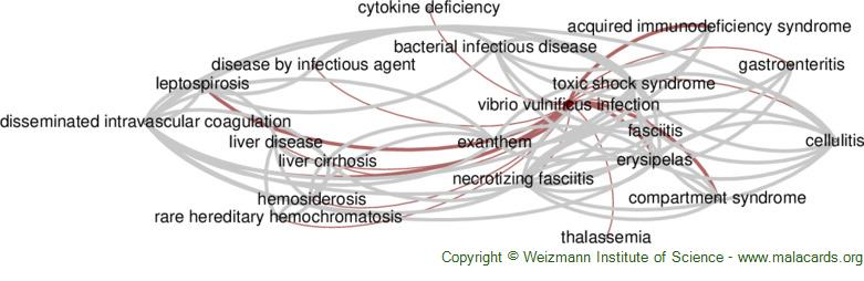 Diseases related to Vibrio Vulnificus Infection