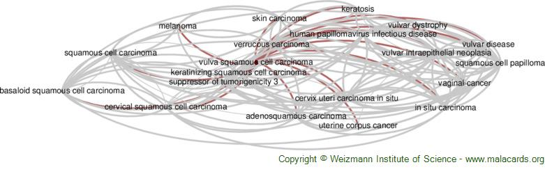 Diseases related to Vulva Squamous Cell Carcinoma